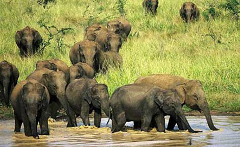Adventure Tour Packages in Sri Lanka